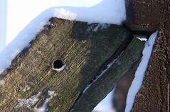 Murène enneigée (Fontenay-sous-Bois - Officiel) Tags: fontenay fontenaysousbois regionparisienne valdemarne iledefrance 94 94120 neige snow bois wood france paris outside murène