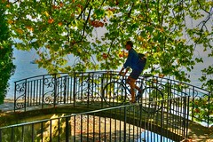 sous le platane under the plane tree (www.nathalie-chatelain-images.ch) Tags: suisse lutry lac lake pont bridge barrire fence arbre tree platane vlo bike homme cycliste cyclist nikon fencedfriday
