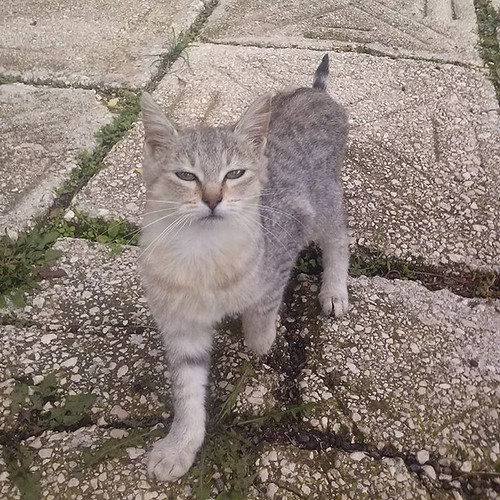 #gatti #home