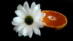 Mandalina cicei (ercanpolat) Tags: flowers flower nature natural natu macromondaysdailyrutins macromondays macro white cicek iek