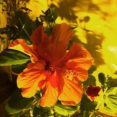 IMG_6037 (sosparkly) Tags: instagram nature trees plants paris england edinburgh florida bermuda beach whimsy