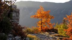 Ce matin (bernard.bonifassi) Tags: bb088 06 alpesmaritimes 2016 thiery counteadenissa chêne feuillage
