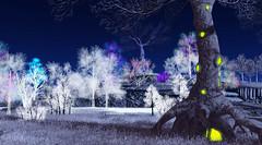 Let it Light! (zuza ritt) Tags: christmaslighting christmaslights magictree virtualworld christmas christmastree xmas xmastree wintertree winterlandscape snow fantasysecondlife opensim opensimulator metaversum virtualreality digitalworld digitallandscape gameworld gamelandscape 21strom meshtree windanimation secondlifetree secondlifechristmastree secondlifexmas