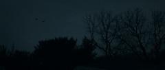 Flights (Derek Mindler) Tags: cinematic cinematography frames graded reference framez film lighting low light dark intense blackmagic director photography webseries street contrast exposure plane jet fighter military flights flight silhouette natural trees outdoors outside