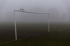December fog, Selly Park (new folder) Tags: birmingham birminghamuk commute fog dawn sellypark park bird seagull football goal goalposts