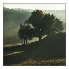 Trees in the morning (loic.pettiti) Tags: programmanual f100 speed1250 iso100 focallength700mm35mmequivalent1050mm focusmodeafc afareadynamicarea3dtracking shootingmodecontinuous vron wbauto1 picturecontrolstandard focusdistance2818m dofinf1311minf hyperfocal2446m f456 g vr lenstamron70300mmf456divcusd