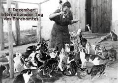 December 5 : IVD = International Volunteer Day for Economic and Social Development. (happycat) Tags: katze cat mensch people tierschutz protectionofanimals internationalertagdesehrenamtes 5dezember december5 internationalvolunteerdayforeconomicandsocialdevelopment gedenkundaktionstag