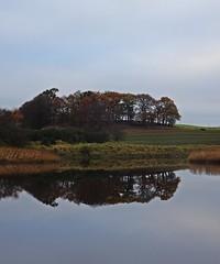 The Mains Attraction (Bricheno) Tags: renfrew bricheno schottland szkocja scotland scozia escocia esccia cosse scoia    inchinnan river cart farm field reflections rivercart oldmains