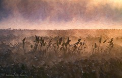 Marsh Mist Rising (Laurie-B) Tags: america american freestate md maryland northamerica northamerican oldlinestate princegeorgescounty usa unitedstatesofamerica westernshore jug bay