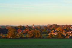 Empingham Gold (AndyorDij) Tags: empingham sunrise dawn goldenhour stpeterschurchinempingham autumn andrewdejardin trees tree hedgerow england rutland uk unitedkingdom 2016