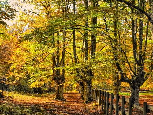 Otoño en el parque natural de Gorbeia
