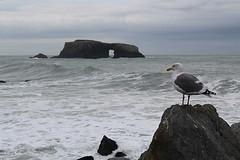 Arch Rock (Gunn Shots (Mark Gunn)) Tags: archrock seaarch gull seagull pacificocean pacific jenner