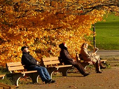 They are enjoying the sun on a cold November Day in the Park (libra1054) Tags: herbst outono autunno fall automne otono autumn park parc parco parque grugapark essen nrw outdoor