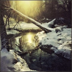 Forest stream (odinvadim) Tags: mytravelgram textured textures iphone editmaster travel iphoneography sunset evening iphoneonly painterly artist snapseed landscape specialist iphoneart graphic painterlymobileart winter forest