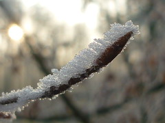 Winter-Buchenknospe (Jrg Paul Kaspari) Tags: trier fagussylvatica knospe bud buche buchenknospe winter frost frosted rauhreif magic wind windfrost