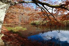 My favorite place 2 (enrix64) Tags: autmn autunno fall lake lago colori enrix64