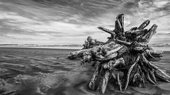 Carters Beach (SP Burrows) Tags: blackandwhite beach landscape lumix panasoniclumixdmcg7 panasoniclumixgvario714mmf40 westcoast cartersbeach newzealand wild