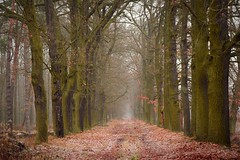 paths and roads (JoannaRB2009) Tags: path road alley avenue oak oaks tree trees winter fall autumn nature mist fog misty foggy frost dolnyśląsk dolinabaryczy polska poland forest woods
