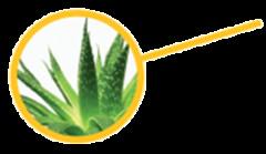 Whole Leaf Aloe Vera Concentrate (RTPR Store) Tags: shingles burns arthritis insomnia acne athletesfoot boils hemorrhoids headaches colitis ulcers bursitis insectbites upsetstomachs skinabrasionsandcuts skinrashesandirritations diaperrashes prostatitisinflammationoftheprostrategland psoriasisandeczema sunburnsandwindburns
