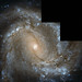 Messier 61 looks straight into the camera