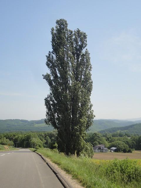 こちらがその木。|