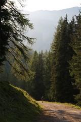 Metsätie vuorilla