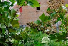 through the brush. (Jukie Bot) Tags: summer philadelphia walking graffiti spain gross ugh philly wandering humid