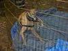 GreyhoundPlanetDay2008060