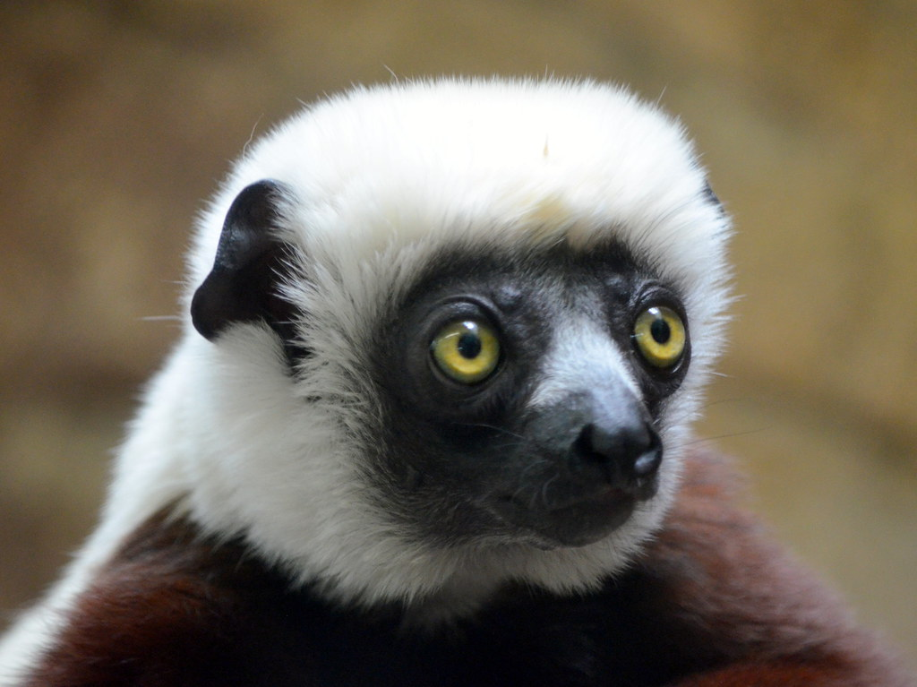 The World's Best Photos of zoboomafoo - Flickr Hive Mind Zoboomafoo
