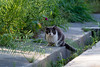 20140504-IMGP3680.jpg (Ethan_Stone) Tags: 野生生物 rawあり