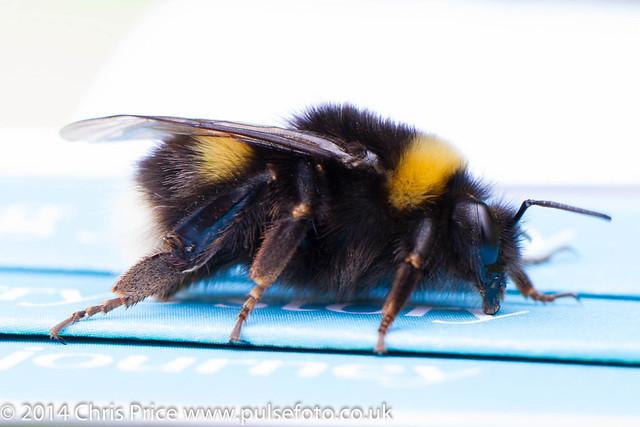 Stourhead Bee