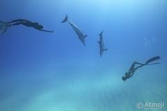 WildQuest Dolphin Swim 6/2014 (Wildquest Bimini) Tags: wild swimming swim underwater free snorkeling freediving dolphins bimini bottlenose dolphinquest wildquest dolphinunderwater underwaterdolphin swimwithdolphin lagoon410 atmoji