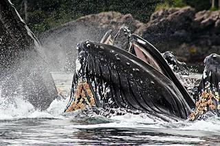 Alaska Salmon Fishing Lodge - Luxury 31