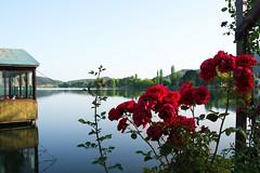 Biraz huzur (Sema K.) Tags: trip roses lake canon turkey izmir glck gl canonphotography lovetotravel canon550d