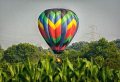 CornfieldLanding (jmishefske) Tags: hot festival wisconsin cornfield nikon air balloon july landing surprise emergency unexpected waterford 2014 d7100