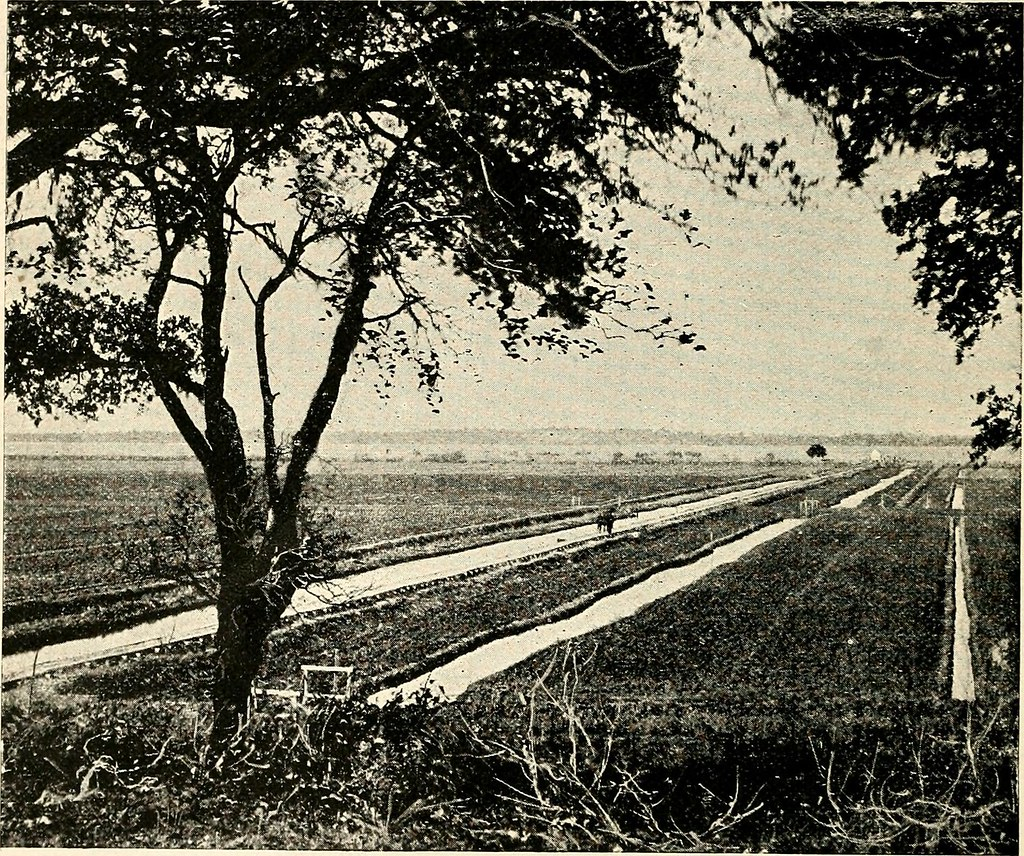"Image from page 115 of ""The Southern States"" (1893)"