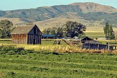 New Mown Hay, Nephi Utah 20