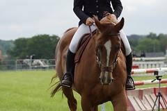 Kesselse Paardenfeesten 2014 (Margot_M) Tags: horses leuven jumping concours 3000 leveninleuven