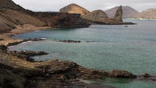 Galapagos Shorts