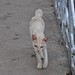 Skinny cat, Mount Phou Si, Luang Prabang