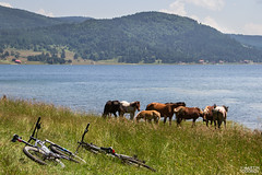 XC (feverpictures) Tags: horse mountain lake bike landscape cross country mtb cube ht ram herd bikers
