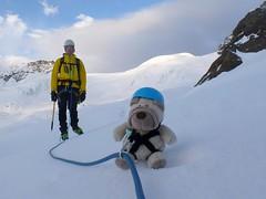 2014-08-04 Am Seil über den Gletscher (bwz_muc) Tags: dog cute puppy pug hund nici süss niedlich mops wau