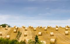 Hay Bales IMG_0010 (zund) Tags: summer field hay bale northeast sherburn