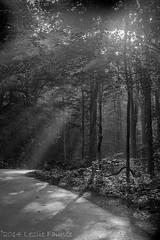 Roarin Forks Motor Wilderness (lezlievachon) Tags: