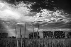 #19 (UBU ♛) Tags: water blackwhite noiretblanc blues biancoenero blunotte ©ubu unamusicaintesta landscapeinblues bluubu luciombreepiccolicristalli