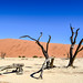 Surreal landscape of Dead Vlei, Namibia