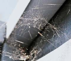 Untitled (PattyK.) Tags: spider nikon web greece ilovephotography amateurphotographer  plataria  kokkinosvrahos  nikond3100 ipiccy