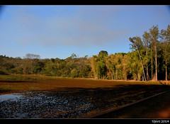 Rio Claro Forest Reserve (tipiro) Tags: brazil nature brasil sãopaulo floresta horto rioclaro coth coth5 sunrays5