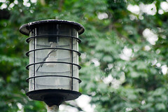 street lamp (LestLei30) Tags: light reflection nature lamp beautiful photography lights photo reflex nice nikon long photographer bokeh streetlamp philippines photograph simplicity manila dslr updiliman eugenio f3556 nikor 18105mm d7100