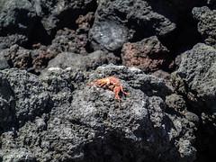 Maui-184 (Photography by Brian Lauer) Tags: maui kihei laperouse nakalelepoint laperousebay ahihikeanaureserve ahihikeanau